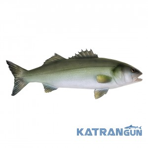 Муляж риби морський карась Omer