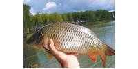 Топ 10 річкових риб за складністю полювання
