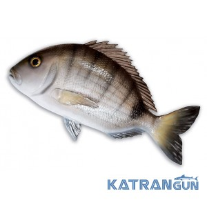Муляж риби морський лящ Omer