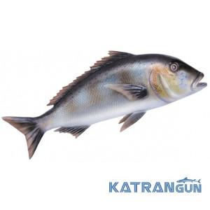 Муляж риби зубан Omer